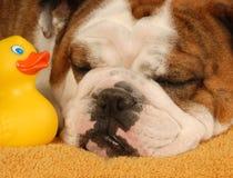 Dog bath time Royalty Free Stock Photo