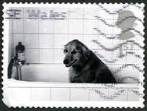 Dog in a Bath UK Postage Stamp Stock Photography