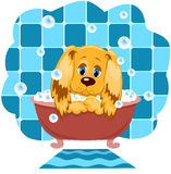 The dog bathes. The dog bathes in a bathroom. Cartoon illustration Royalty Free Stock Photography