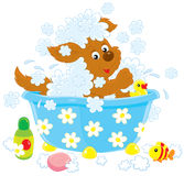 Dog bathing Stock Images