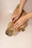 Dog bathing Stock Photo