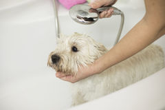 Dog bathing at home Stock Photography