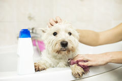 Dog bathing at home Stock Photos