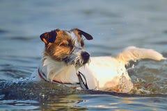 Dog bathing Stock Images