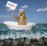 Dog in the bathtub on the sea 2. The dog sailor drifts in a bathtub on the sea after a shipwreck. It holds a sign that says sos royalty free stock image