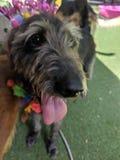 Dog 9 royalty free stock photos
