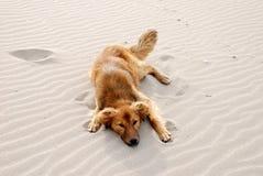 Dog on the beach. Dog sleeping on the beach Stock Photos