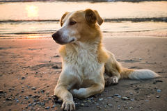 Dog on beach Royalty Free Stock Image