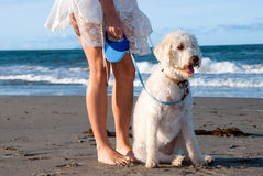 Dog at the beach Royalty Free Stock Photo