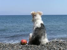 Dog at the beach Stock Photos