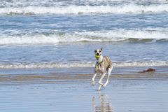 Dog on beach stock photo