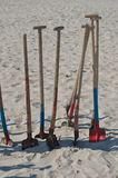 Dog at the beach Royalty Free Stock Photos
