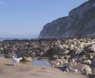 Dog on Beach. Taken at Reighton Sands, East Yorkshire, UK Royalty Free Stock Image