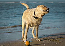 A dog on a beach Stock Photo
