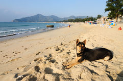 Dog on the beach. A dog lying on the beach Stock Photo