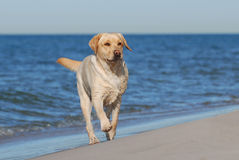 Dog on the beach stock photography