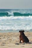 Dog on Beach Royalty Free Stock Photography