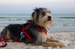 Dog on beach. In evening light Royalty Free Stock Photo