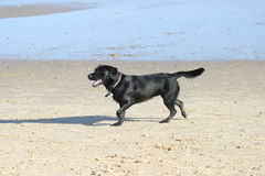 Dog on beach Stock Image
