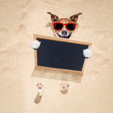 Dog at the beach and banner Royalty Free Stock Images