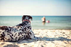 Dog on a beach Royalty Free Stock Photography