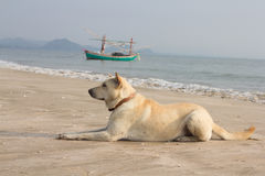 Dog of the beach. A beautiful dog on the beach, she looks kind and friendly Stock Photo