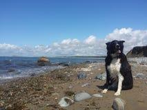 Dog on beach Stock Image