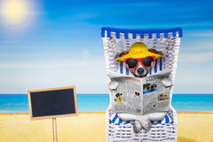 Dog beach chair. Dog reading newspaper on a beach chair with sunglasses and yellow hat on summer vacation holidays,with blank placard or blackboard stock photos