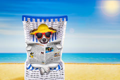 Dog beach chair. Dog reading newspaper on a beach chair with sunglasses and yellow hat on summer vacation holidays, isolated on white background Stock Photography