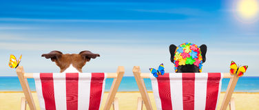 Dog beach chair in summer. Couple of dogs on a beach chair or hammock at the beach relaxing on summer vacation holidays, ocean shore as background royalty free stock image