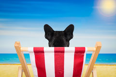 Dog beach chair in summer Royalty Free Stock Images