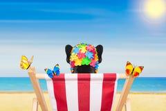 Dog beach chair in summer Royalty Free Stock Photos
