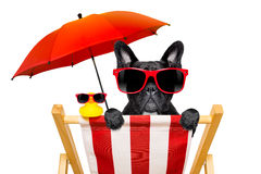 Dog beach chair in summer Royalty Free Stock Photo