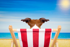 Dog beach chair in summer Stock Photos