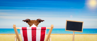 Dog beach chair in summer. Jack russell dog on a beach chair or hammock at the beach relaxing on summer vacation holidays, ocean shore as background, blackboard royalty free stock image