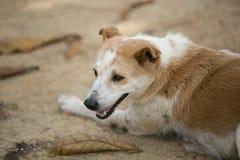 Dog at the beach. Royalty Free Stock Image