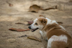 Dog at the beach. Royalty Free Stock Images