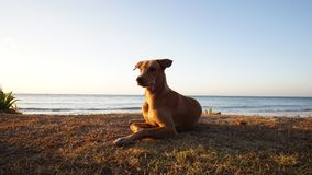 The Dog on the Beach, The Dog at the Sea. The dog travel on the beach, The dog looking sunrise at the sea Stock Photography