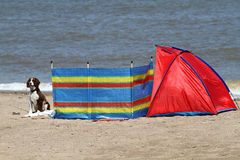 Dog and beach equipment. royalty free stock images