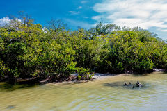 Dog beach Florida. Mid afternoon at high tide. Mangroves in the sun Stock Image