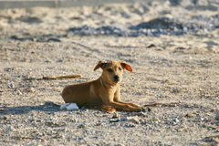 Dog on the Beach. A Funny Dog on the Beach royalty free stock images