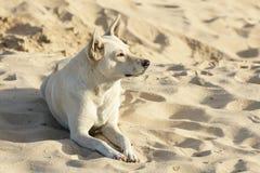 Dog on the Beach Royalty Free Stock Photos