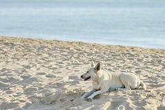 Dog on the Beach. A Funny Dog on the Beach Stock Photos