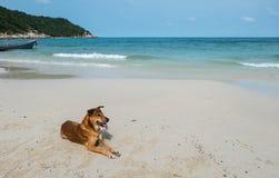 Dog on the beach at Haad Rin, Koh Pha Ngan Stock Photo