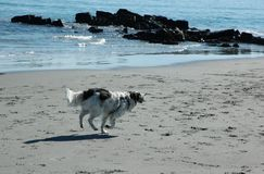 Dog on the beach III Royalty Free Stock Images