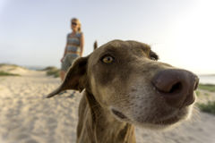 Dog at beach Royalty Free Stock Photography