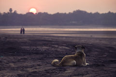 Dog on a beach. Looking at a couple Royalty Free Stock Photos