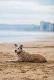 Dog on the beach. Dog lying on the beach Stock Photo