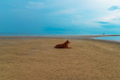 Dog beach Royalty Free Stock Photo