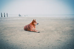 Dog beach Stock Photo
